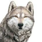 Profile picture of Dartwolf